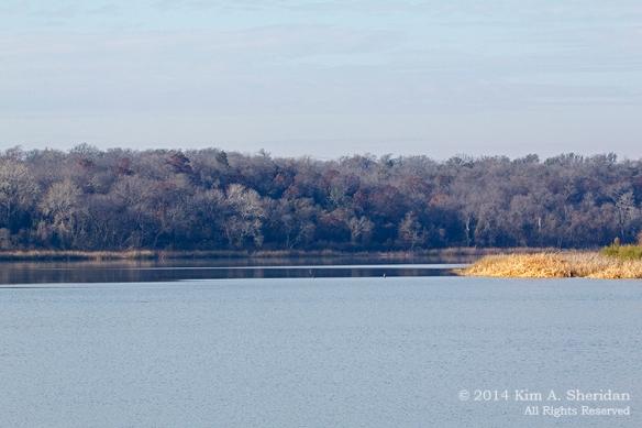 Fort Worth NCR Landscape_7998a