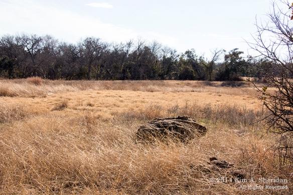 Fort Worth NCR Landscape_8216acs