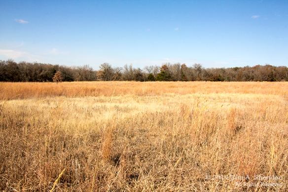 Fort Worth NCR Landscape_8251 acs