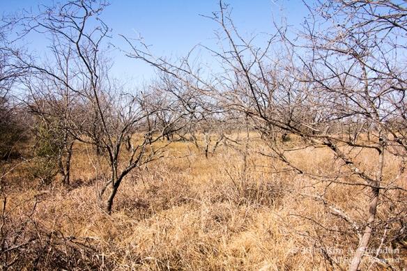 Fort Worth NCR Landscape_8270 a