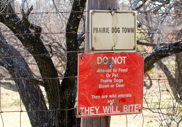 Fort Worth NCR Prairie Dog_8278acs