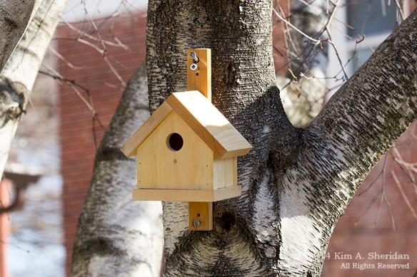 Nest Box Day 1_7793acs