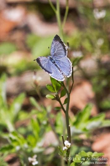 HNWR Butterfly_9952 acs