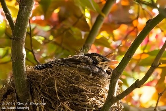 Robin Nest_0272