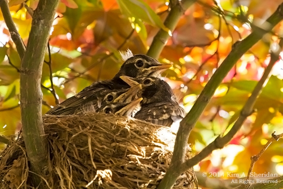 Robin Nest_0310