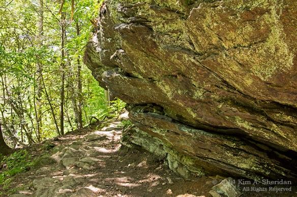 Wissahickon 4 Trail_9730a