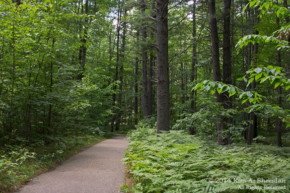 MI Hartwick Pines 1 Old Growth Forest_9078acs