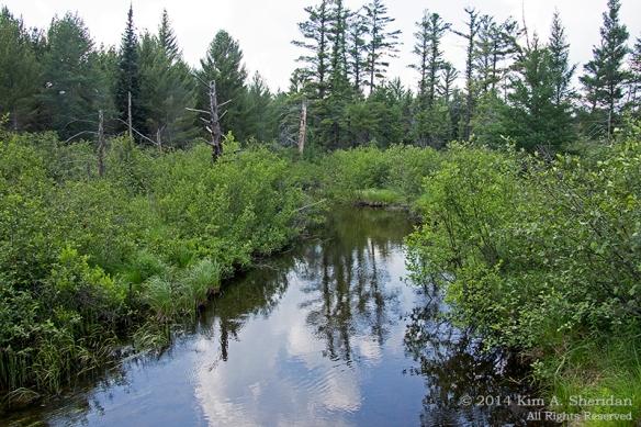 MI Hartwick Pines 2 Scenic Drive_9134a