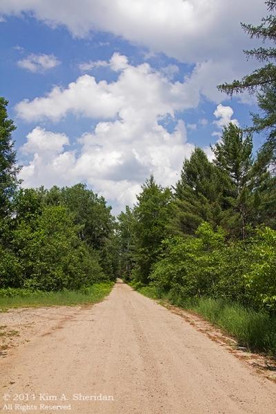 MI Hartwick Pines 2 Scenic Drive_9214s