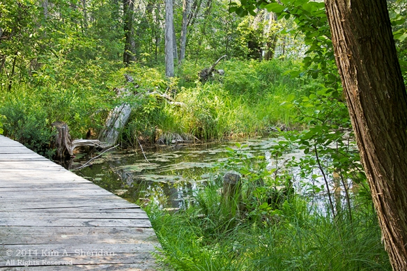 MI Hartwick Pines 3 Nature Trail_9281a