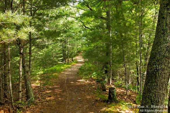 MI Ludington State Park_9420acs