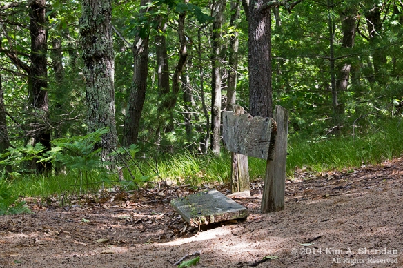 MI Ludington State Park_9430acs