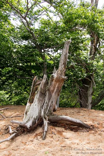 MI Ludington State Park_9516acs