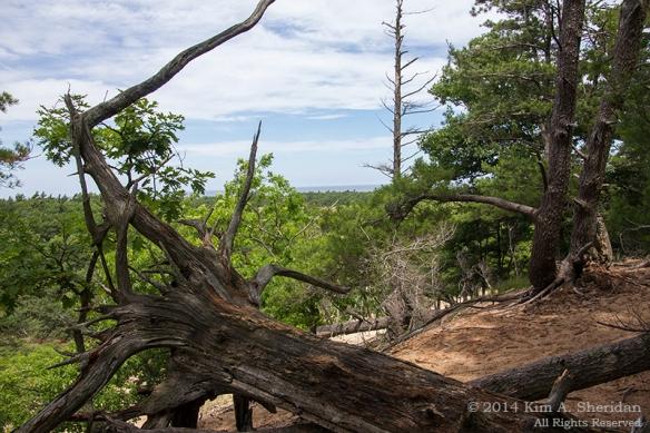 MI Ludington State Park_9578a