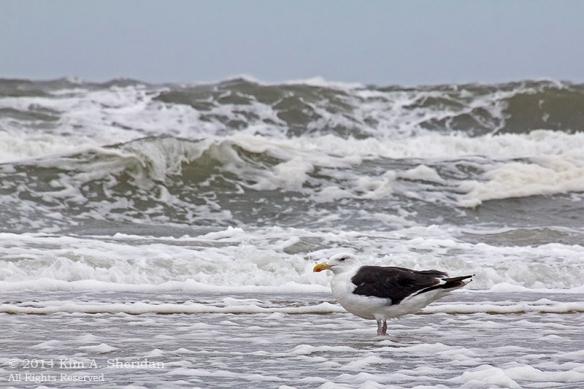 140924_OC Stormy Beach_2816acs