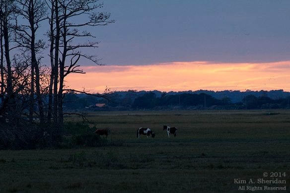 141018_Chincoteague NWR_0957 acs