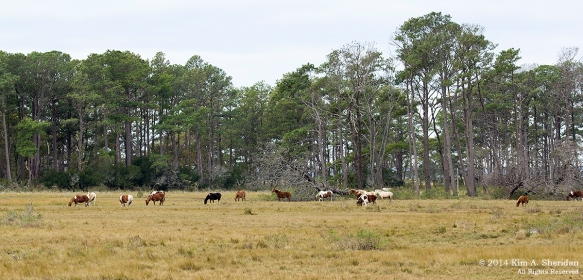 141019_Chincoteague NWR Beach Road_1728