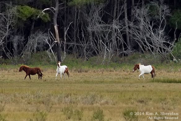 141019_Chincoteague NWR Woodland Trail_1226 acs2