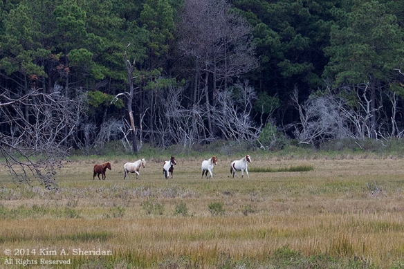 141019_Chincoteague NWR Woodland Trail_1230 acs