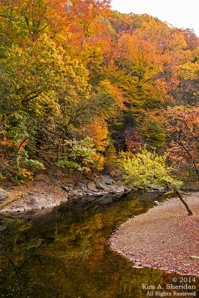 141031_Wissahickon Autumn_2587acs