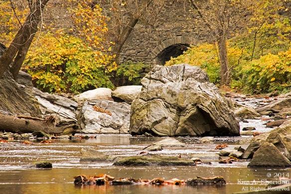 141031_Wissahickon Autumn_2885a