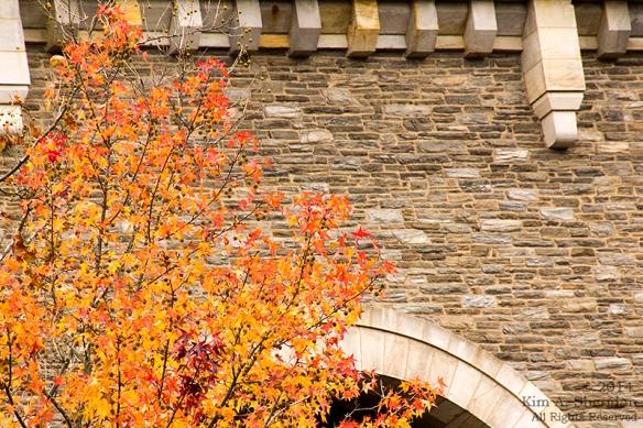 141031_Wissahickon Autumn_2934a