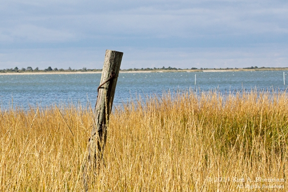 141019_Chincoteague NWR Woodland Trail_1503a