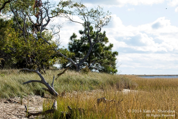 141019_Chincoteague NWR Woodland Trail_1504acs