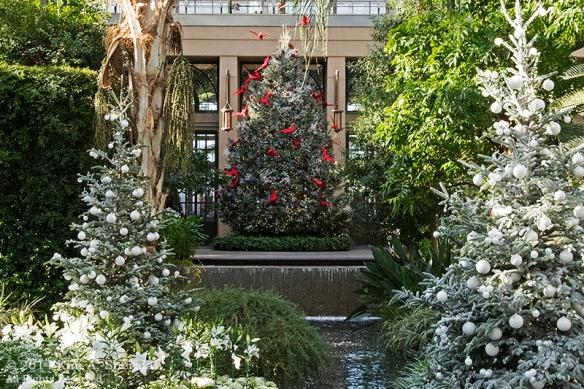 141225 Longwood Gardens_3374acs