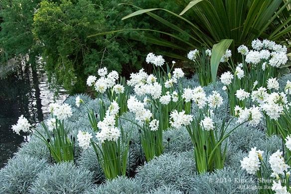 141225 Longwood Gardens_3441a