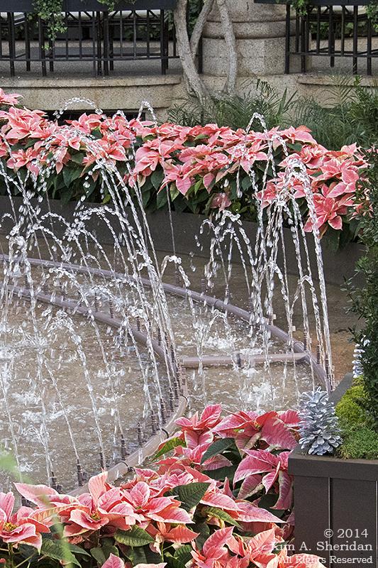 141225 Longwood Gardens_3466a