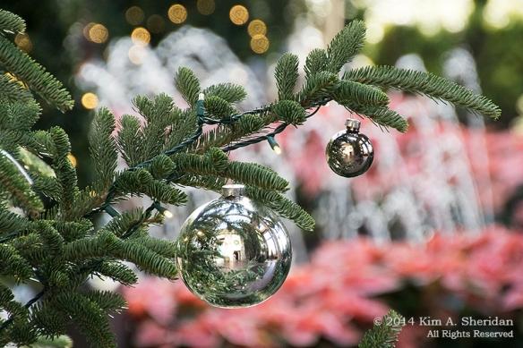141225 Longwood Gardens_3481a