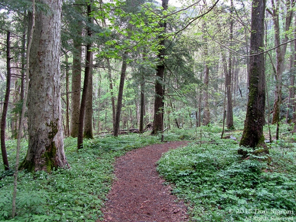 The Cove Hardwood Nature Trail.  Photo by Don Nigroni.