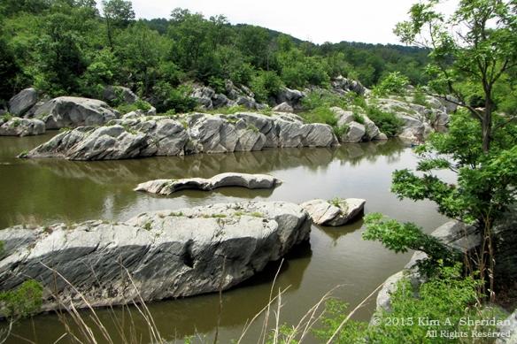 150417_PA Susquehanna Conowingo Pool_0381acs