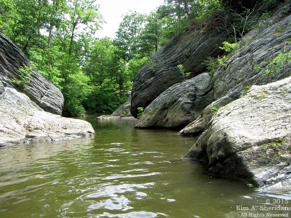 150417_PA Susquehanna Conowingo Pool_0494 acs