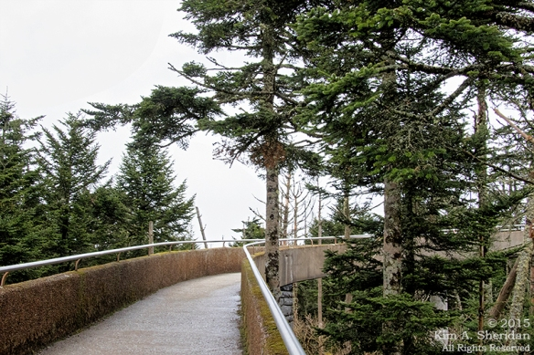 150417_NC GSMNP Clingmans Dome_5504acs