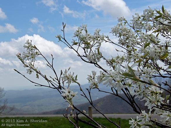 150420_VA BRP Farm Country_6025acs