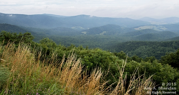 150704_VA Shenandoah National Park_0514acs