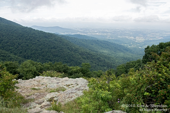 150704_VA Shenandoah National Park_0619acs