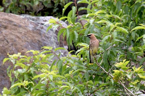 150704_VA Shenandoah National Park_0628acs