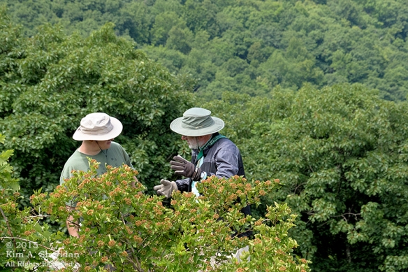 150704_VA Shenandoah National Park_0686acs