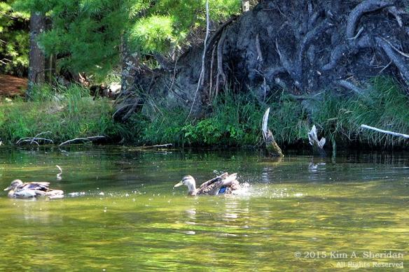 150821_MI LSP Hamlin Kayak_1900acs