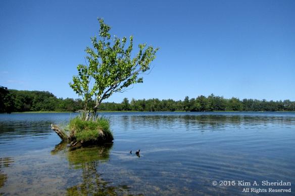 150821_MI LSP Hamlin Lake Kayak_1814acs