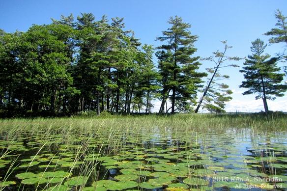 150821_MI LSP Lost Lake Kayak_1620