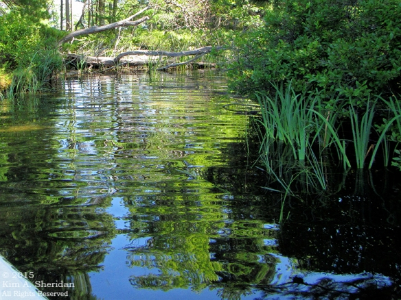 150821_MI LSP Lost Lake Kayak_1728acs