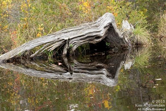 151014_NJ Atsion Lake Kayak_9345acs
