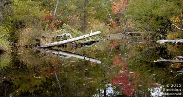 151014_NJ Atsion Lake Kayak_9360acs