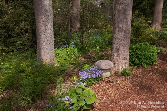 140503_Mt Cuba 3 Woodland_6088a
