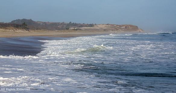 151127_DE Cape Henlopen State Park_6988acs