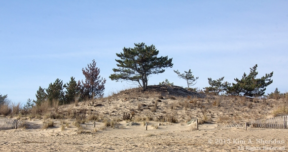 151127_DE Cape Henlopen State Park_6994acs